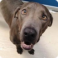 Adopt A Pet :: Pluto - Bryan, TX
