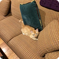 Adopt A Pet :: Dietrich - Cardwell, MT