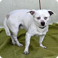 Adopt A Pet :: Truman - Yreka, CA