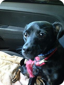 Terrier (Unknown Type, Small) Mix Dog for adoption in Cleveland, Tennessee - JAMES