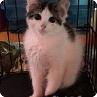Adopt A Pet :: Lenore - Great Neck, NY
