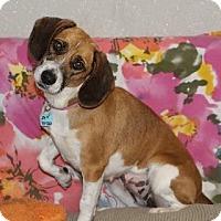 Adopt A Pet :: Emma - Avon, NY