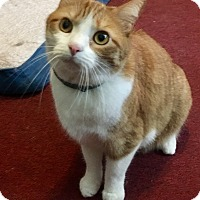Adopt A Pet :: Zoey Roo - Nashville, TN