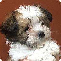 Adopt A Pet :: I'M ADOPTED Confetti Clark - Oswego, IL