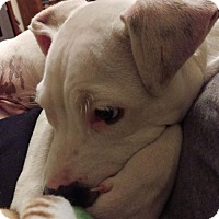 Adopt A Pet :: Trigger - Elkton, FL