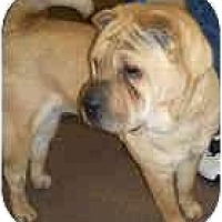 Adopt A Pet :: Robin - Bethesda, MD