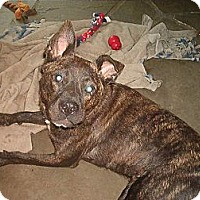 Adopt A Pet :: Coco - North Jackson, OH