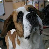 Adopt A Pet :: Shorty - Canoga Park, CA