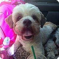Adopt A Pet :: Kyoto - Encinitas, CA