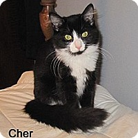 Adopt A Pet :: Cher - Catasauqua, PA