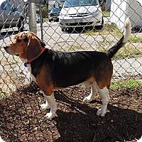Adopt A Pet :: Wyatt Charles - Waldorf, MD