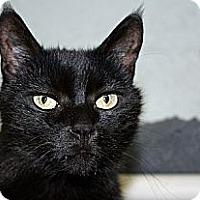 Adopt A Pet :: Stan Mikita - Lombard, IL