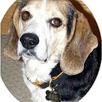 Adopt A Pet :: Ralphie K - Phoenix, AZ