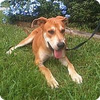 Adopt A Pet :: Floppy - miami beach, FL