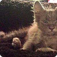 Adopt A Pet :: Cecelia - Chandler, AZ