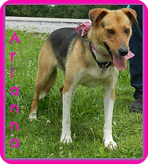 German Shepherd Dog Mix Dog for adoption in Lawrenceburg, Tennessee - Arianna