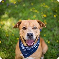 Adopt A Pet :: Milo - Crescent City, CA