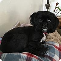 Adopt A Pet :: Khloe - Fresno, CA