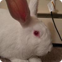 Adopt A Pet :: Lenny - Conshohocken, PA