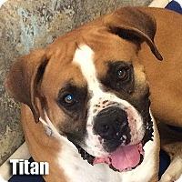 Adopt A Pet :: Titan - Encino, CA