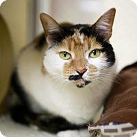 Adopt A Pet :: Calla - Kettering, OH