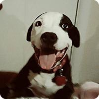 Adopt A Pet :: Dixie - Rockville, MD