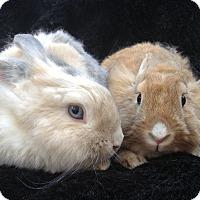 Adopt A Pet :: Clover & Benji - Watauga, TX