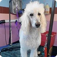 Adopt A Pet :: Rowdy Edwards - Spartanburg, SC