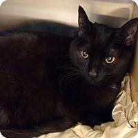 Adopt A Pet :: Bella - Morganton, NC