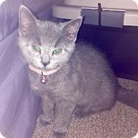 Adopt A Pet :: Tessa - Richmond, VA