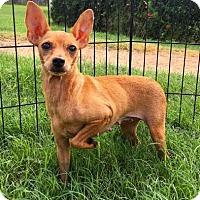 Adopt A Pet :: Serenity - Fredericksburg, TX