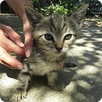 Adopt A Pet :: Tiny - Monrovia, CA