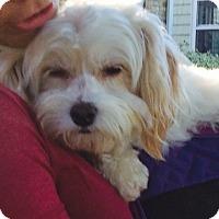Adopt A Pet :: Tiffany - Thousand Oaks, CA