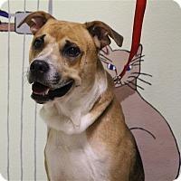 Adopt A Pet :: Denny - Elyria, OH
