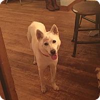 Adopt A Pet :: DoDo - Silverdale, WA