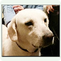 Adopt A Pet :: Lacy *MEET ME!* - Wakefield, RI
