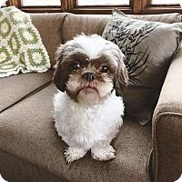 Adopt A Pet :: CeCe - Eden Prairie, MN