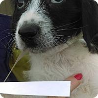 Adopt A Pet :: Wonder~ meet me! - Glastonbury, CT