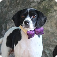 Adopt A Pet :: Rebel - Dalton, GA