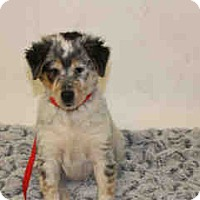 Adopt A Pet :: KENNEL 40 - Corona, CA