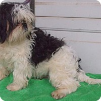 Adopt A Pet :: Cisco - Birch Tree, MO