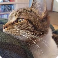 Adopt A Pet :: Terrabella - Hazel Park, MI