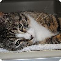 Adopt A Pet :: Cupid - Ridgeland, SC