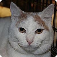 Adopt A Pet :: Joey - Santa Monica, CA