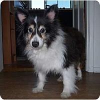 Adopt A Pet :: Bonnie Bella - San Diego, CA