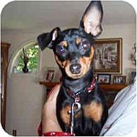 Adopt A Pet :: KyAnn - Springvale, ME
