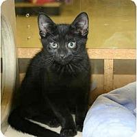 Adopt A Pet :: Rinaldi - Jenkintown, PA