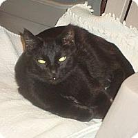 Adopt A Pet :: Max - Elmhurst, IL