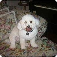 Adopt A Pet :: Patti the Playful - La Costa, CA