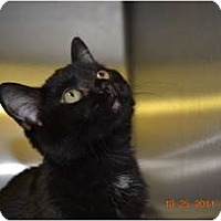 Adopt A Pet :: Jessie Boo - McDonough, GA